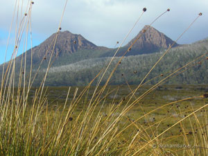 Mt King William, Tasmania